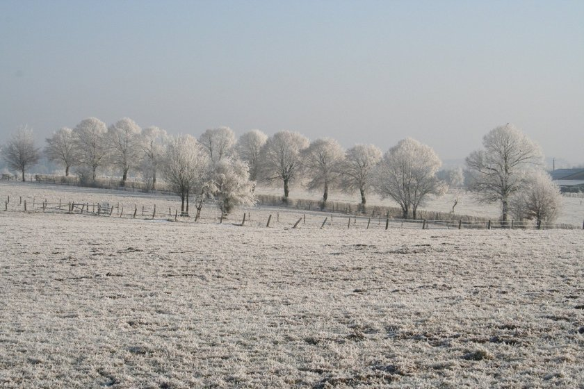 frosted-trees-4-1404625